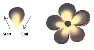 5 petal leaf